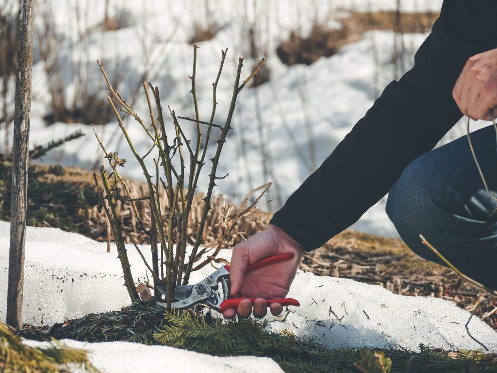 Landscape Winter Tips