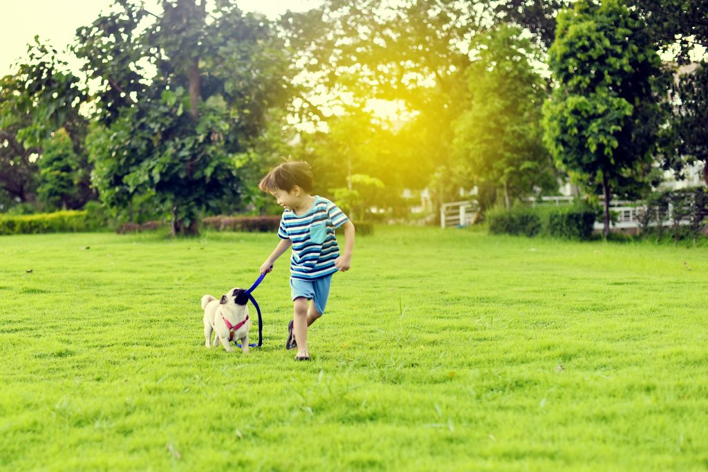 Lawn Care Tips for your Pets